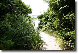 ビーチに続く道